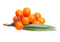 Sea buckthorn isolated on the white background Royalty Free Stock Images