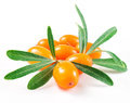 Sea buckthorn isolated on the white background Stock Images