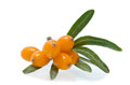 Sea buckthorn over the white Royalty Free Stock Photos