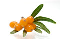Sea buckthorn over the white background Stock Photography