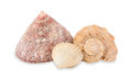 Sea cockleshells. Stock Photography