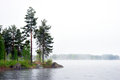 Sea with conifer trees in fog on swedish east cost Royalty Free Stock Image