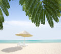 Sea cost sandy seashore fresh green palm tree leaves summer time season Royalty Free Stock Photography