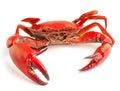 Sea crab Royalty Free Stock Photo