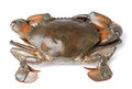 Sea crab on white background Royalty Free Stock Photo
