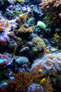Sea creatures in an ocean garden salt water create a colorful aquarium Royalty Free Stock Photos