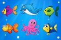 Sea creatures under the sea illustration of Royalty Free Stock Photo