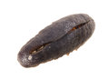 Sea cucumber. close up dried sea cucumber Royalty Free Stock Photos