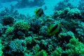 Sea deep or ocean underwater with coral reef as a background Royalty Free Stock Photo