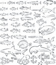 Sea fishes and creatures vector illustration of collection Stock Photography