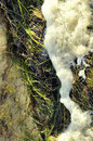 Sea Foam and Grass Stock Photo