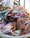 Sea food at market selling dry calamari in thailand Stock Image