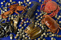 Sea food variety of with fresh lobster crab clam mussel still life Royalty Free Stock Image