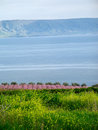 Sea of Galilee Stock Image