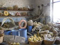 Sea gifts- marine sponge. Royalty Free Stock Photo
