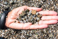 Sea glass in the hand fort bragg california view of a lot of Royalty Free Stock Photography