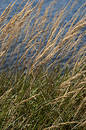 Sea grass along beach Stock Photography