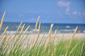 Sea grass close up of on a beautiful sunny summer day with and the blue sky in the background Stock Photography