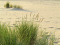 Sea grass on the coast of the baltic sea sandy beach in summer Royalty Free Stock Photography