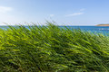 Sea through the grass high with in background Stock Photography