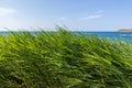 Sea through the grass Royalty Free Stock Photo