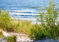 Sea and green bushes blue baltic seaside Stock Image
