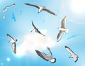 Sea gull set vector illustration Royalty Free Stock Images