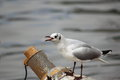 Sea gull sitting on the shelf photo taken in yunnan province china Stock Photo