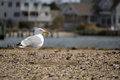 Sea gull standing by the bay Stock Images