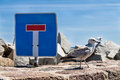 Sea gull and traffic sign on the mole in sassnitz germany Royalty Free Stock Image