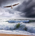Sea gull and waves Stock Photo