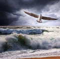 Sea gull and waves Stock Images