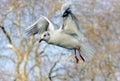 Sea-gulls 6 Royalty Free Stock Photos