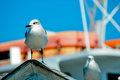 Sea gulls chillin on a roof Royalty Free Stock Photography