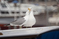 Sea gulls on vessel roof pair of Royalty Free Stock Photo