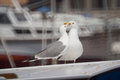 Sea gulls on vessel roof pair of Stock Photography