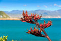 Sea and hills landscape with red flax flowers Royalty Free Stock Photo