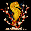Sea horse Royalty Free Stock Photos