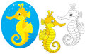 Sea horse seahorse three versions of the vector illustration in a cartoony style Royalty Free Stock Images