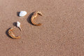 Sea Horse And Shell On Sand In...