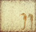 Sea Horse with texture of paper Royalty Free Stock Image