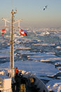 Sea ice off the coast of greenland viewed from a tourist icebreaker Royalty Free Stock Photo