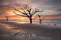 Charleston SC Botany Bay Sunrise Tree on Beach Royalty Free Stock Photo