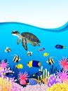Sea life background Stock Photos