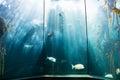 Sea life in a beautiful illuminating tank at the aquarium Royalty Free Stock Photos
