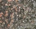 Sea life sediment Royalty Free Stock Photo