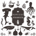 Sea life, marine animals. Vintage hand drawn elements Royalty Free Stock Photo