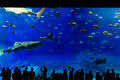Sea life park in okinawa silouette of people Stock Photography