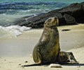 Sea Lion, Galapagos Islands, E...