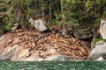 Sea Lion Haulout Royalty Free Stock Photo